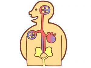 糖尿病と体の関係